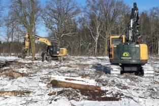 Klimaatverandering zet Natuurpunt aan om... bomen te kappen