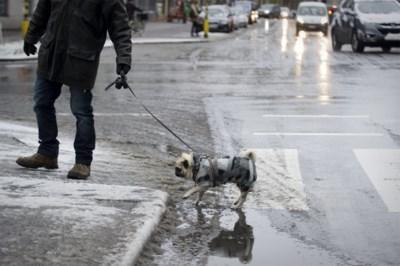 """Strooizout schadelijk voor huisdieren: """"Maak poten altijd zuiver als ze binnenkomen"""""""