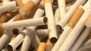 Douane ontdekt 4,5 ton tabak voor namaaksigaretten bij grote actie in Opglabbeek