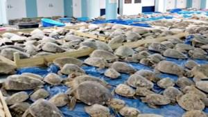 Duizenden schildpadden mogen opwarmen in congrescentrum