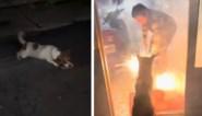 Gezin wil Chinees nieuwjaar vieren met vuurwerk, tot speelse hond gevaarlijke situatie veroorzaakt