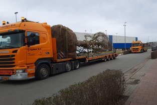 Twee grote bomen met bouwkranen op nieuwe terrein Natuurhulpcentrum geplant