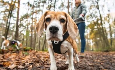 Moet je echt zo vaak wandelen met je hond? De waarheid achter de mythes over onze trouwe viervoeter
