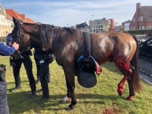 Op hol geslagen paard zet verkeer op stelten, tot politieman het in cowboystijl kan doen stoppen