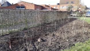 Eerste bomen plukroute geplant, maar eerste fruit pas over vijf jaar verwacht