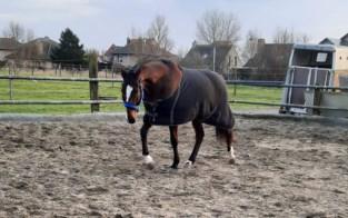"""Amazone ziet paard op hol slaan en moet dier laten inslapen: """"Hartverscheurende beslissing, maar enige juiste"""""""