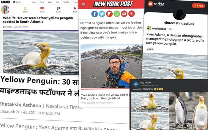 """Van Rusland tot China: foto van zeldzame pinguïn gaat viraal : """"Er komt zelfs een liedje"""""""