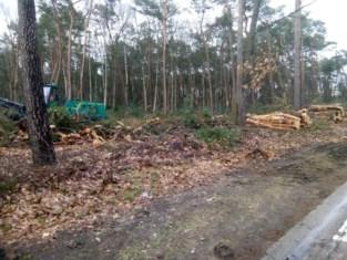 Bomen sneuvelen voor 41 nieuwe ecologische woningen in Maasmechelen