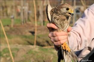 VOC-vogels kiezen de vrijheid in 'De Zoetenhof'
