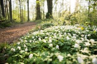 Natuurpunt kapt bomen voor meer biodiversiteit