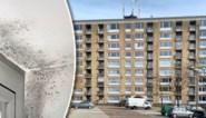 Schimmel, verstoppingen en overal vocht: flatgebouw is één groot krot en toch wist huisvestingsmaatschappij van niets