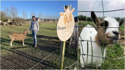 """Kinderboerderij in rouw na overlijden mascotte Sofie: """"Vermoedelijk gaven bezoekers haar de verkeerde voeding"""""""