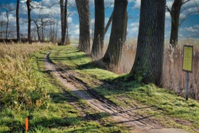 Na 14 jaar kan laatste stukje voetweg eindelijk worden verhard, maar er moeten wel populieren voor sneuvelen