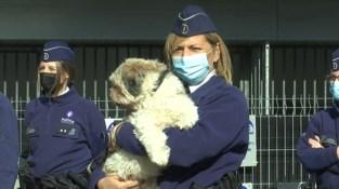 Politiezone Sint-Truiden-Gingelom-Nieuwerkerken breidt dierenpolitie fors uit
