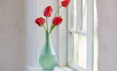 Met deze vaasjes en bloempotten haal je de lente zo naar binnen