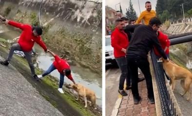 Hond zit vast in beek, maar groep mannen brengt redding dankzij creatief plan
