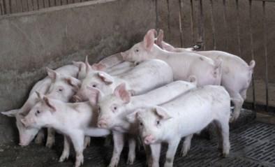 Drieduizend varkens gestorven bij brand in Duitse boerderij