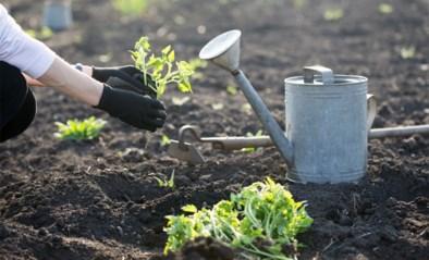 Is het nog te vroeg om in de tuin te werken? Of mag ik nu al gras zaaien en groenten planten? Al jouw vragen over tuinieren beantwoord