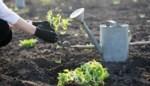 Mag ik nu al gras zaaien en groenten planten? Of is het nog te vroeg om in de tuin te werken? Al jouw vragen over tuinieren beantwoord