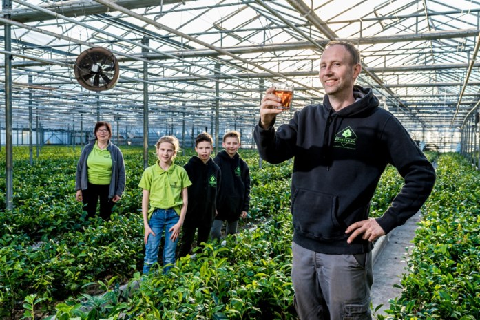 """Eerste Belgische thee in de maak, """"maar geen idee hoe die zal smaken"""""""