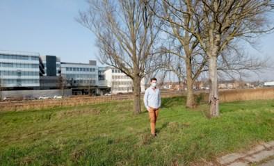 """Plannen voor betonkade nog weinig realistisch en dus ontstaat nieuw idee: """"Maak van groenstrook langs Dender een mooi park"""""""