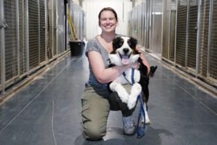 """Puppy Cas werd gefokt en liep aandoening op: """"Zonder operatie lijdt hij veel pijn"""""""