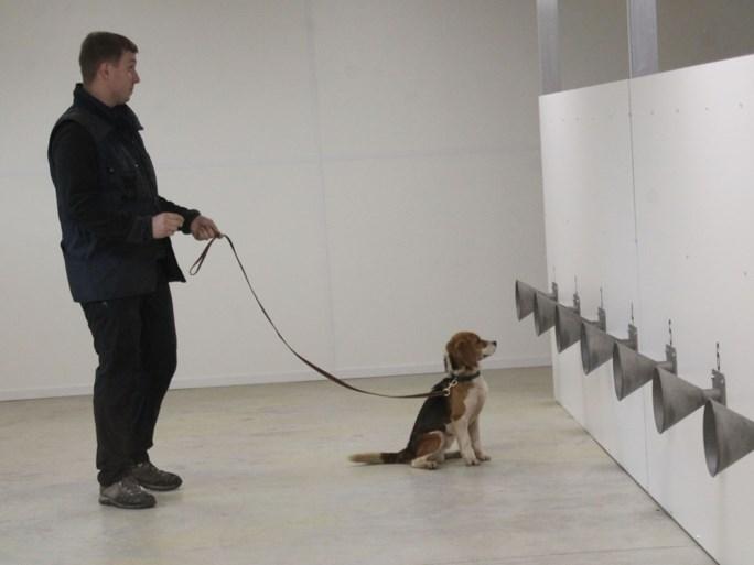 """KV Oostende werkt mee aan proefproject met honden om Covid-19 op te sporen: """"Soms acht dagen sneller dan PCR-test"""""""
