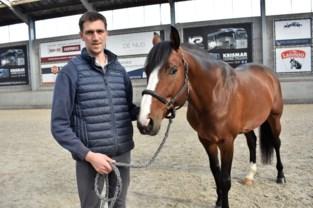 """Wie van paardensport moet leven, zit in zak en as door agressief virus: """"Door corona leden we al tot 80 procent omzetverlies"""""""