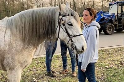 Ruzie loopt uit de hand in Oudsbergen: paard sterft na aanrijding door tractor