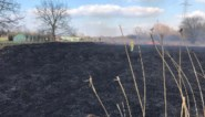 Rietvelden vatten vuur in natuurgebied