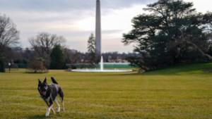 """Honden van Amerikaanse president Joe Biden keren """"snel"""" weer terug naar Witte Huis na incident"""