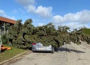 Boom op wagen en losgekomen daken: brandweer krijgt meer dan honderd oproepen van stormschade