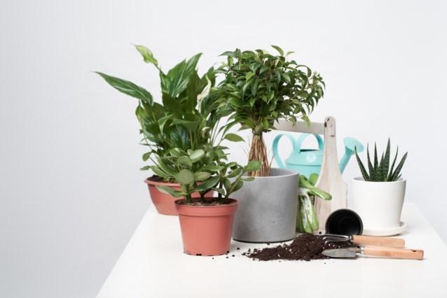 DAG 17. Zo blijven je kamerplanten mooi groen