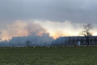 Felle brand legt deel van stoeterij Goorhof in de as