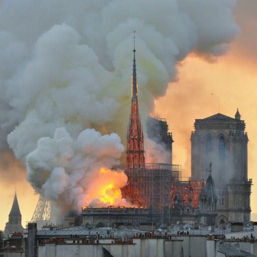 """Eeuwenoude eiken die moeten sneuvelen voor vernielde Notre-Dame verdelen Frankrijk: """"Ecologische moord"""""""
