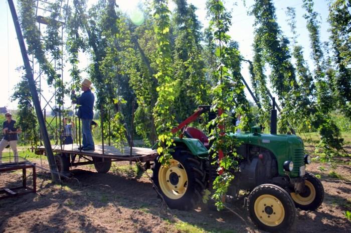 Landbouwraad wil rijke hopgeschiedenis nieuw leven inblazen
