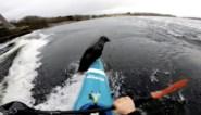 """Kajakker wordt verrast door zeehond die kajak bijna laat kapseizen: """"Nog nooit meegemaakt"""""""