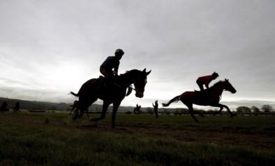 Zeventien paarden overleden aan dodelijk virus waaronder twee in België