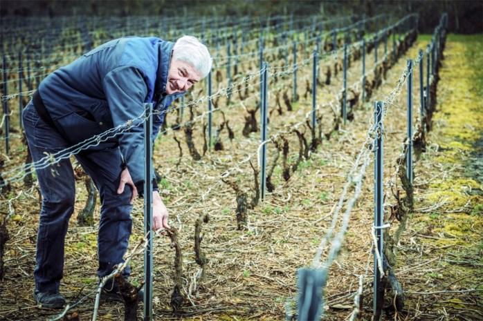 """Belgische wijn boomt, Crevits vraagt sector om zich te organiseren: """"Vroeger speelden we wijnboertje, nu is het voor echt"""""""