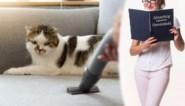 Hoe haal ik dierenhaar uit de zetel? En hoe verwijder ik kalkaanslag? Onze huishoudexperte Zamarra Kok beantwoordt jouw vragen