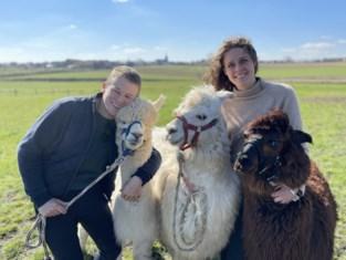 """Ga eens op wandel met deze snoezige berglama's: """"Ze worden met de dag socialer en komen al uit zichzelf goeiendag zeggen"""""""