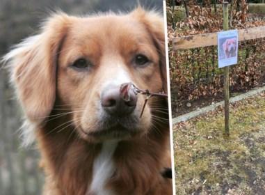 Hondje Ozkar met één messteek gedood in de tuin: politie voert onderzoek naar verdachte