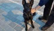 Puppy vastgebonden en achtergelaten aan station, politie zoekt eigenaar