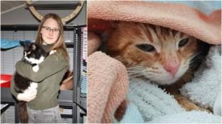 """Rechtbank moet bitsige strijd om hoederecht verwaarloosd katje Basil beslechten na vete tussen asieluitbaatster en zelfverklaarde eigenaar: """"Ik riskeer dwangsom van 500 euro per dag dat ik hem niet teruggeef"""""""