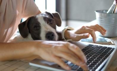 Thuiswerken is meer dan ooit de norm: dankzij deze accessoires kan je jouw laptop in een beter werkbare houding zetten