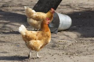 Gemeenten geven eigen invulling aan verbod op verkoop van levende dieren met korting