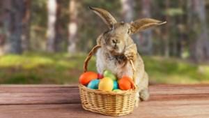 Van haas en konijn