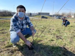 """Westhoek kreeg er deze winter tienduizenden bomen bij: """"Zorgen voor een verbetering van ons landschap"""""""