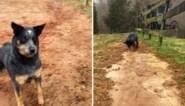 """Hond gaat de wereld rond door snel en efficiënt te graven: """"Kon de crisis in Suezkanaal snel opgelost hebben"""""""