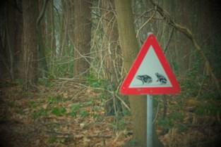 Natuurpunt Keerbergen sluit overzetactie voor amfibieën af